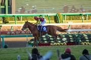 競馬写真館 - Beautiful Thoroughberd