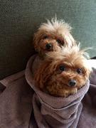 murirニコニコごはんと、愛犬たち