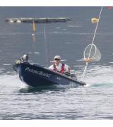 FISH12の釣れないボーター