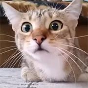 おすすめ人気動画紹介