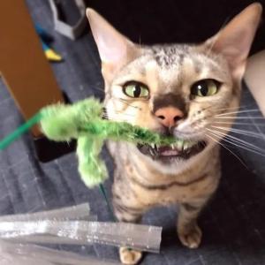 おしゃべり猫くんと