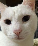 ネコが好きちょっと前まで保育士