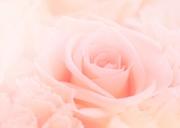 blue rose∞