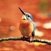 中学からの成長ホルモン治療〜ORANGE BIRD〜