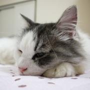 なんちゃってアクアリウム女子のブログときどき猫