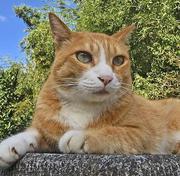 看板猫トラと相談庵の癒し日記