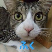 """保護猫カフェまちねこで出会った""""ふくとテル"""""""