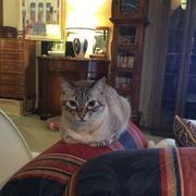 猫のトム&専業主婦の日常 in札幌