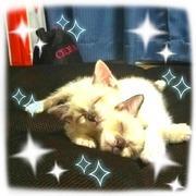 ✴うちの猫 チャチャとアカリの福岡弁な日常✴