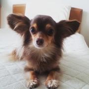 大きなお耳。