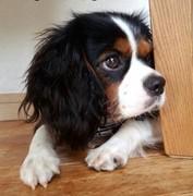 愛犬まるのつぶやき日記
