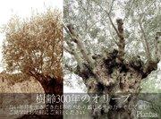 栃木のガーデンデザインPlantus