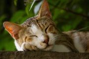 不眠症撲滅!「質の高い睡眠法」で取り戻す健康活力
