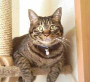 我が家の猫たちと趣味の日々陶芸 スイミング