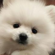 白ポメラニアンと好きな事で生きる滝沢亮自由ブログ