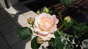 K-gardenroomdiary