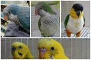 鳥は見るのも飼うのも食べるのも好き
