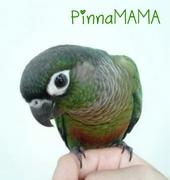 PinnaMAMAさんのプロフィール