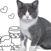 ブリティッシュショートヘア 猫の小鉄