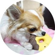 WanDo!(ワンドゥ)〜犬との暮らし知恵袋〜