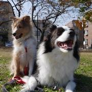 しっぽの記録「まったり犬育て」