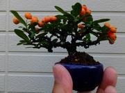 enjoy bonsaiさんのプロフィール