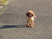 ♡可愛い犬と大好きなゴルフ♡