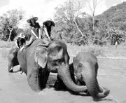 Angkorさんのプロフィール