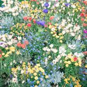 花と くらしと それ以外したくない