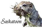 Saskatoonをはじめよう