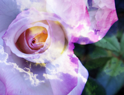 bouquet de ciel