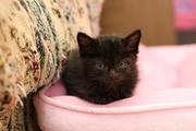 黒猫ノワールの日記
