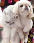 犬と猫とリラックスライフ