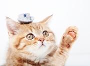 猫を家に迎え入れるための準備ブログ