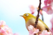 日本旅行ひとり旅物語