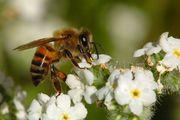 寺尾養蜂日本支社ブログ