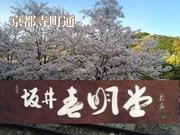 坂井春明堂