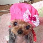 犬の洋服☆ミルク