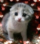 Merci Cat Life(メルシーキャットライフ)