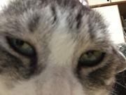 保護猫ビビとブリード猫ナイトの何も格差にゃい