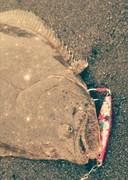 北海道 道南発 「俺のユルい釣り」