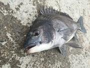 淡路島を愛する紀州釣り師