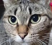 猫に愚痴を聞いてもらえない