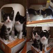 「ピンキー」と「はなび」のすくすく育て!育猫ブログ