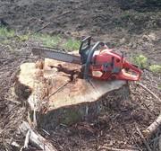 林業とスケボーと車?とあれこれ
