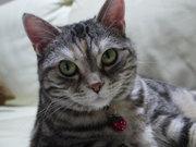 猫とキャンプとエトセトラ