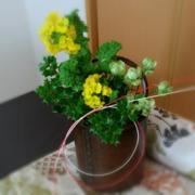 Happy茶々DO(ドー)で良き風をつなぐ
