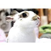 らぶ・らびっと・らいぶ-Love Rabbit Life-