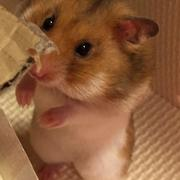 ハム太郎と共に動物愛護活動。