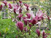 紫木蓮さんのプロフィール